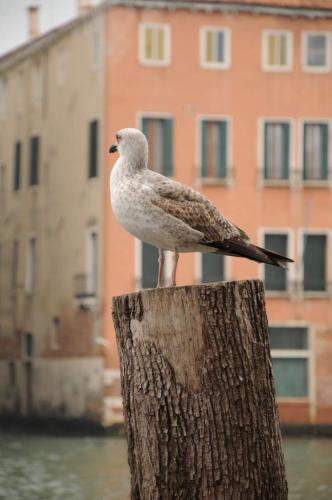 Venedigs Müllabfuhr