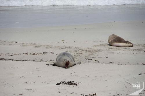 Noisy Seal