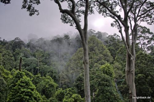 Danum Valley Im Nebel