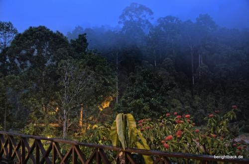 Danum Valley Dschungel Aussicht