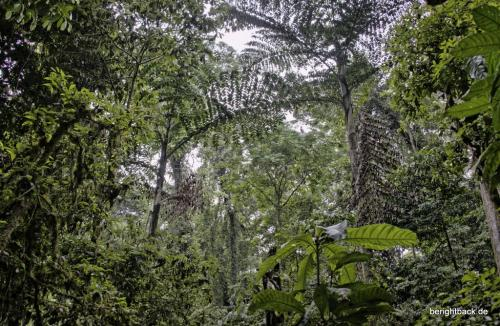 Danum Valley Dschungel
