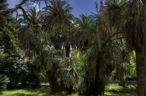 Yucca Palme in Lissabon