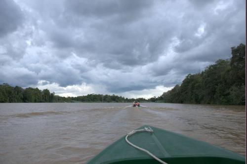 Kinabantangan Flussfahrt