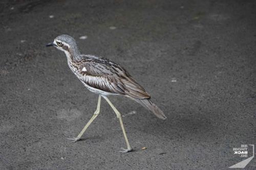 Brisbane Zoo Bird