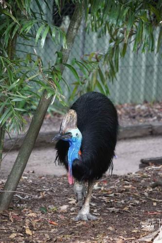 Brisbane Zoo