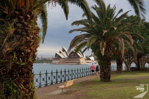 Palmen am Hafen von Sydney