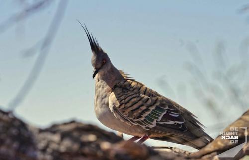 Birds with an attitude