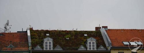 Berliner Dächer