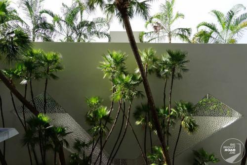 Miami - Parkhauspalmen