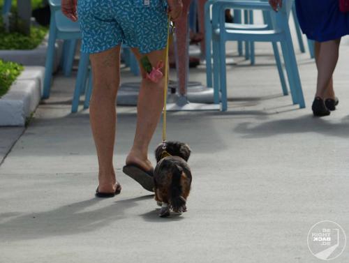 Miami - Dackel in Schuhen