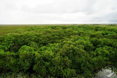 Everglades Blätterdach