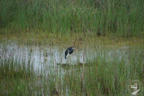 Everglades Vogel