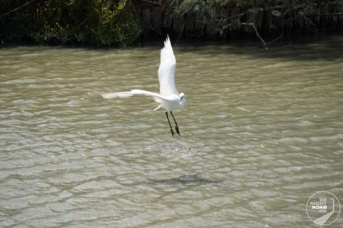 Camargue Vögel