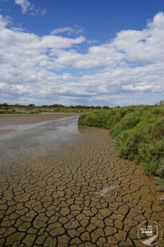 Carmague Naturschutzgebiet