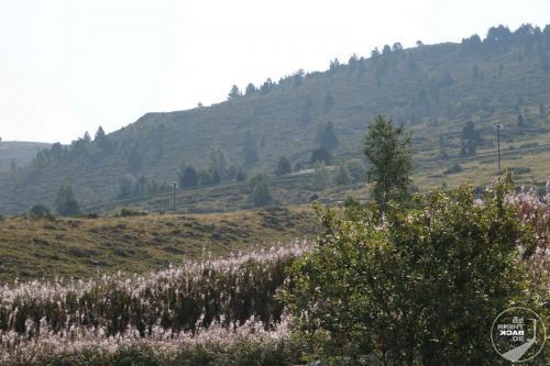 Andorra Wiesen