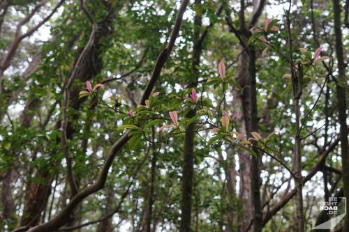 Kolopa State Park Flashy Flora