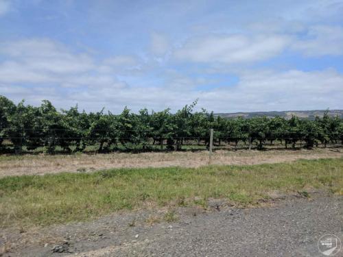 Adelaide Wein