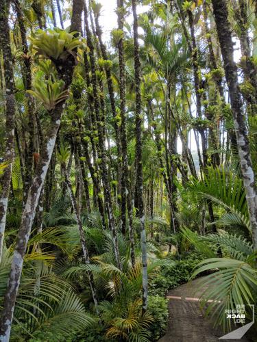 Martinique - Waldwanderung