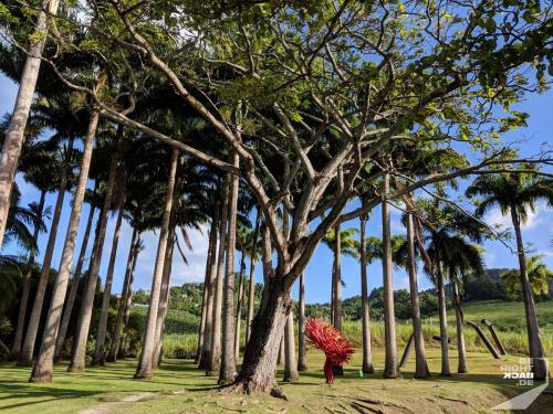 Martinique - Habitation Clément Park