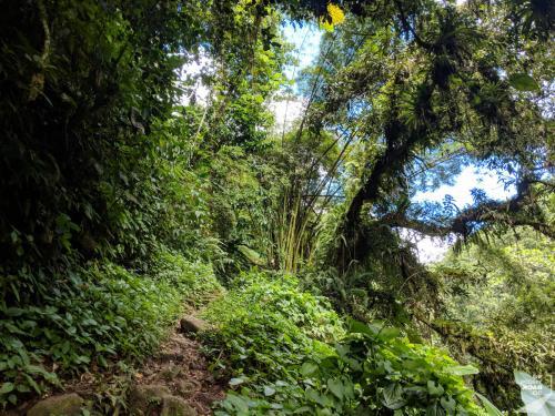 Martinique - Cascade de Didier First Steps