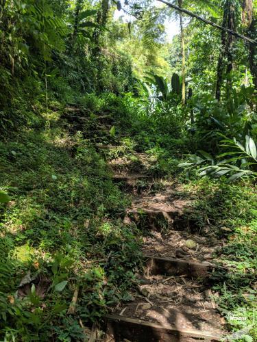 Martinique - Cascade de Didier Steps