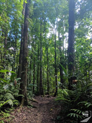Martinique - Cascade de Didier Forest