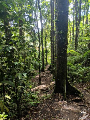 Martinique - Cascade de Didier Path