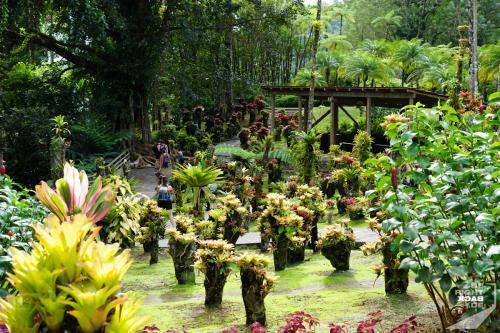 Jardin de Balata - Pflanzensammlung