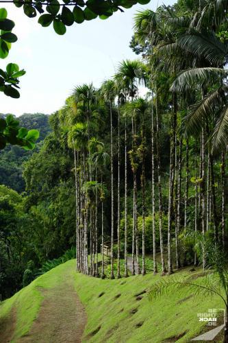 Jardin de Balata - Baumgrenze
