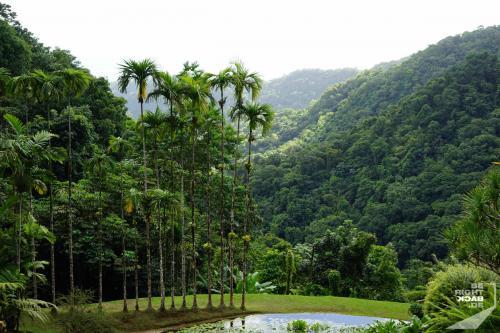 Jardin de Balata - Vom Teich Ins Tal