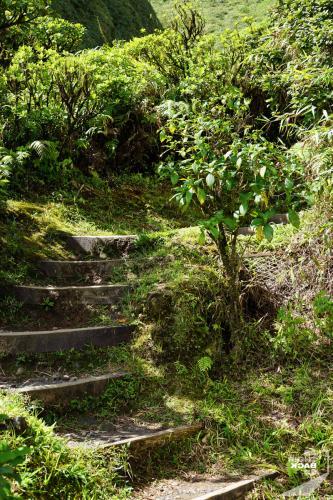 Mt Pelée Treppe