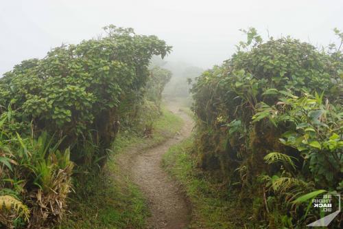 Nebel auf dem Pelée Wanderweg