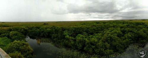 Everglade Panorama