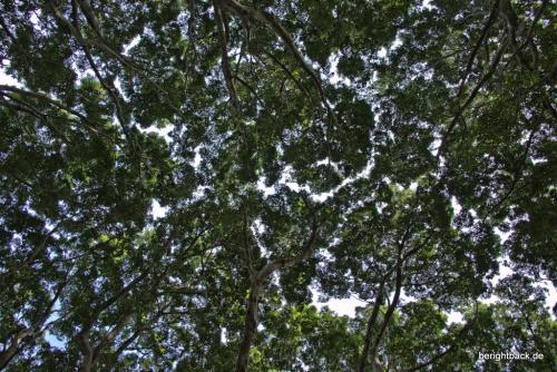 Sydney Hyde Park Blätterdach