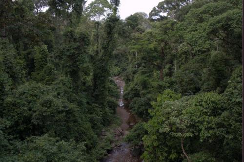 Der schönste Dschungel der Welt im Danum Valley